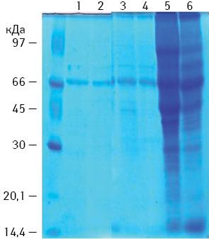 Експериментальне обґрунтування застосування білків теплового шоку у вакцинотерапії хворих зі злоякісними новоутвореннями