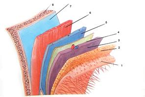 Вибір реконструктивної методики у хворих на рак слизової оболонки ретромолярного трикутника
