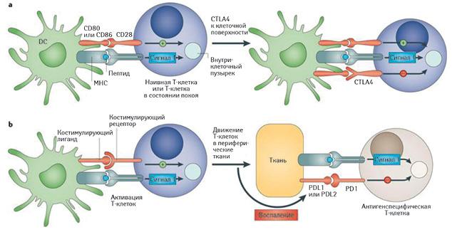 Лечение больных генерализованной меланомой кожи: современные подходы иперспективы