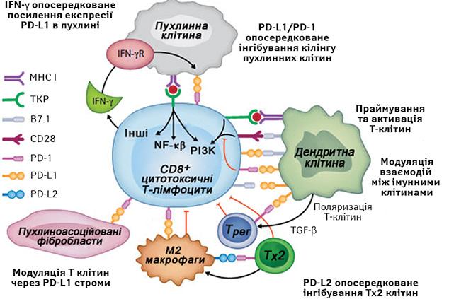 Блокування PD 1/PD L1/2 шляхів— перспективна стратегія лікування пацієнтів із В клітинними лімфомами (огляд літератури)